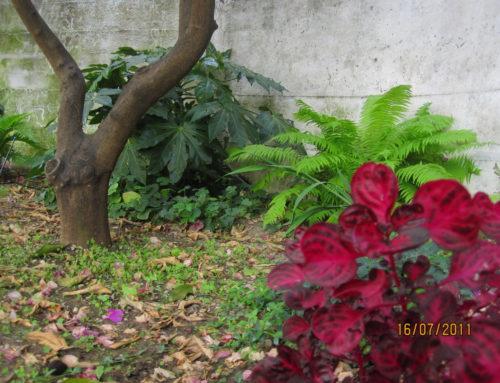 Mon jardin façon sous-bois